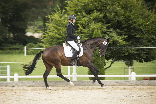 Penelope-B beim Reitpferdechampionat in Oisnitz Juli 2019