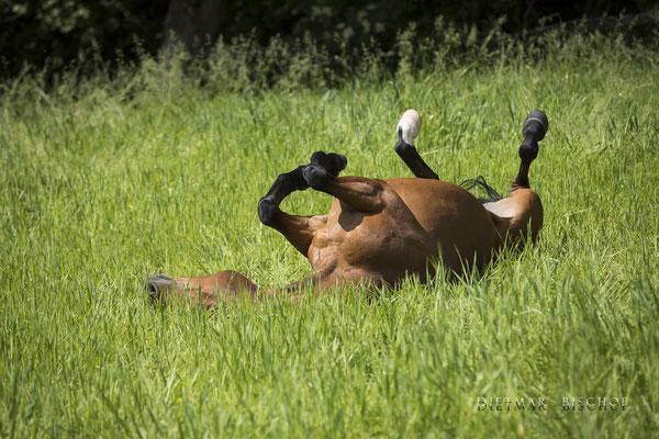 Ariella als Jährling auf der Alm   .. oder vielleicht an anderes Pferd ?!?  ;-)