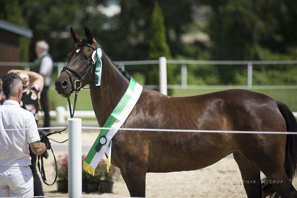 Penelope-B ist Landessiegerstute 3-4 Jährige Juli 2019