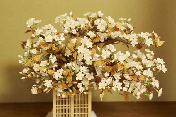 上巳の御殿花 左近の桜