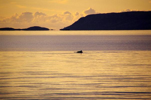 ...und die Schweinswale ziehen vorbei