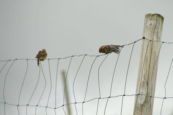Vogelpause, mal alles durchdehnen