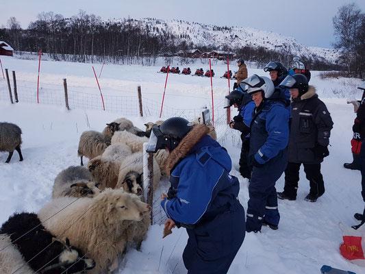 Stopp am Wendepunkt mit Kaffee und Schafe füttern