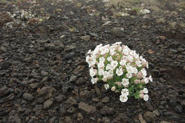 ...nur ein paar Blumen streuen ihre Farbe in die Landschaft