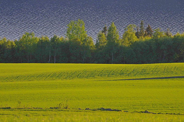 saftiges Grün des Frühlings