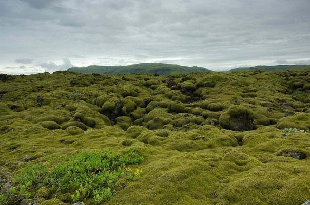 moosbewachsene Lavafelder