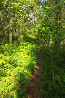 der Weg durch den lichten Wald