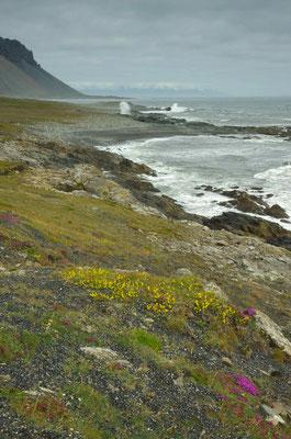 auf dem Weg zu unserer Unterkunft in der Nähe von Skalafellsjökull