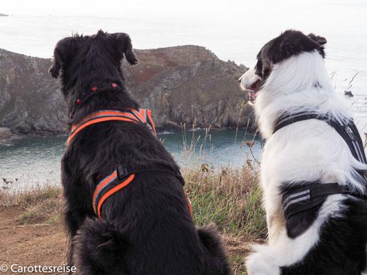 Digger und Carotte betrachten die Aussicht.
