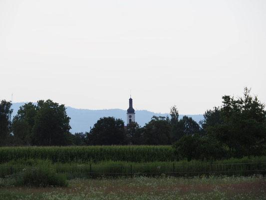 Wie ein Leuchtturm weist der Kirchturm den Weg nach Meißenheim