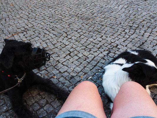gechillte Kreuzberger Hunde