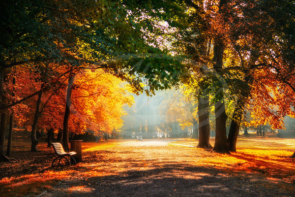 Herbst im Schloßpark Gotha