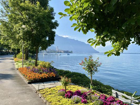 Sympathique les berges vers Montreux