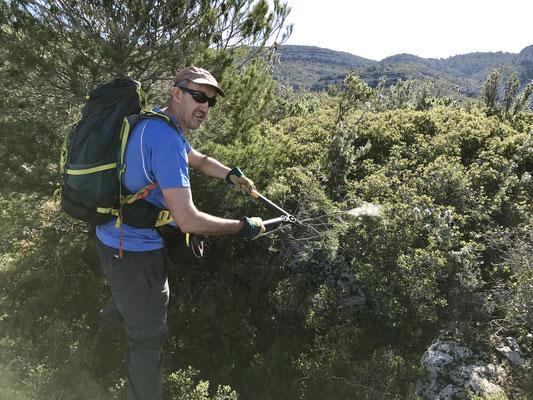 Bernard en profite pour couper des nids de chenilles processionnaires