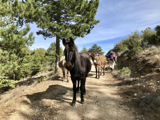 Rencontre avec une mule et des ânes