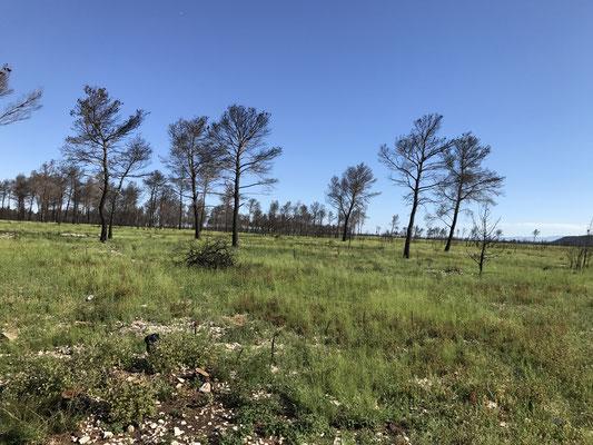 Les arbres calcinés encore sur pied