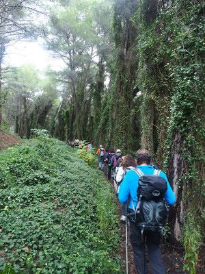 Passage en forêt vierge à deux pas de Cassis