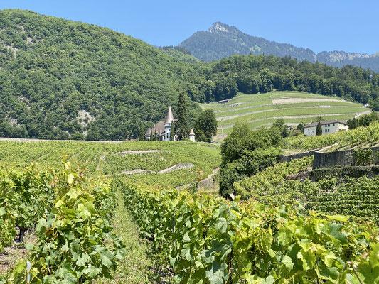 Les vignes de l'Aigle, où est fait un vin réputé