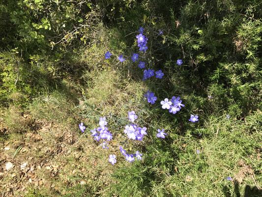 Et d'autres fleurs