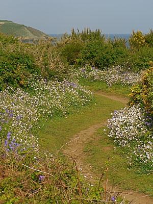 sentier côtier au printemps
