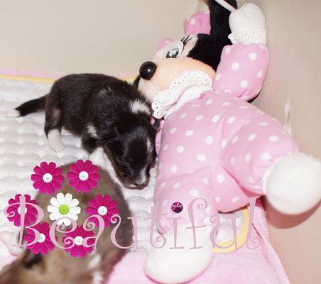 Black Pearl kuschelt mit Minny Mouse