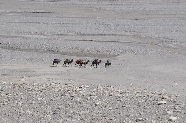 Kamelkarawane mit Expeditionsgepäck im Shaksgam Tal <br> © Ralf Dujmovits