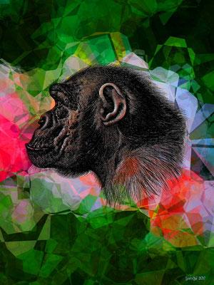 Bonobo - 2017