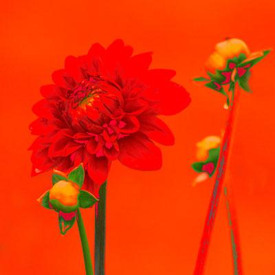 Orange - 2010