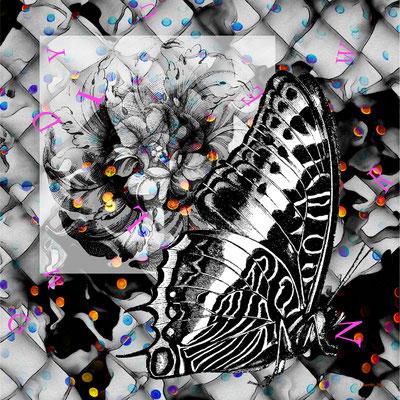Papillon gris - 2017