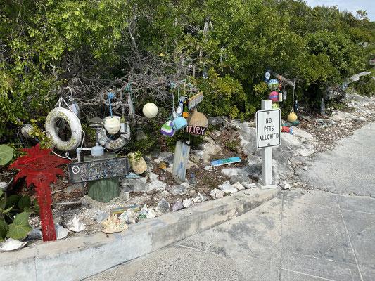 Auf Compass Cay  kann man mit Haien schwimmen ... ich beschränke mich darauf die Insel anzuschauen :o/