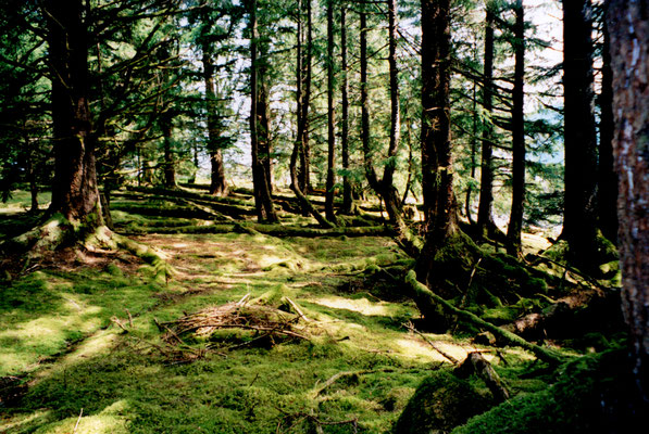 Laxspa'aws (Pike Island), BC, Canada)