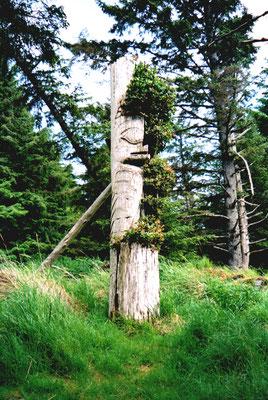 Sgang Gwaay (Anthony Island), Gwaii Haanas, Haida Gwaii (Queen Charlotte Islands,  BC, Canada)