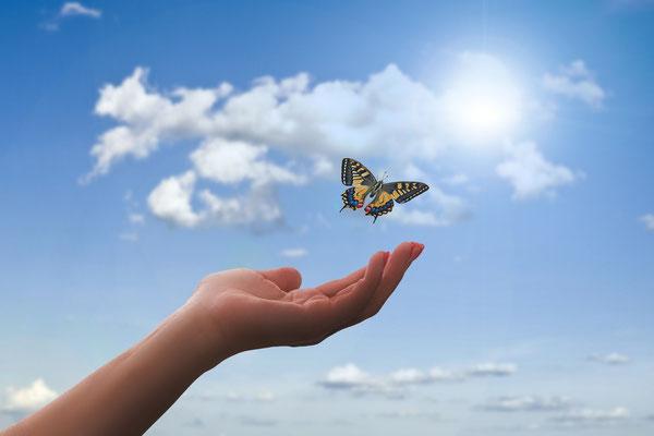 Schmetterlinge fliegen lassen als Glückssymbol