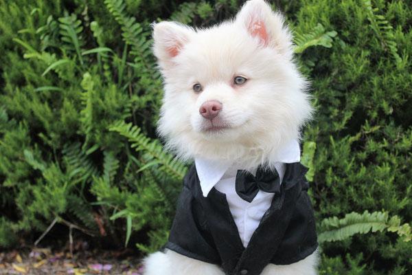 Ein Hund als Ringträger