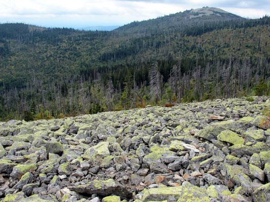 Blockfeld am Steinfleckberg mit Blick auf den Lusengipfel