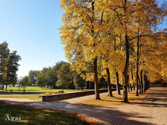Bad Saarow - Fontanepark, Uferstraße