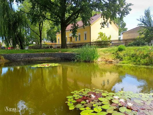Immobilienmakler Berlin-Wartenberg - Dorfteich Wartenberg mit Seerosen