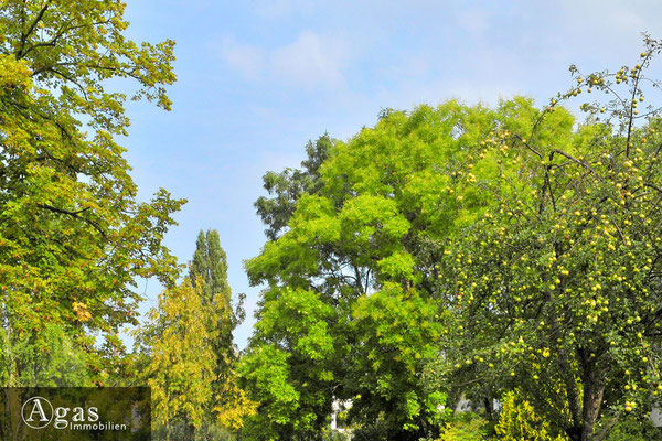 Das Gotland - Prenzlauer Berg - Ihre Nachbarschaft: Grüne Gärten im Botschaftsviertel