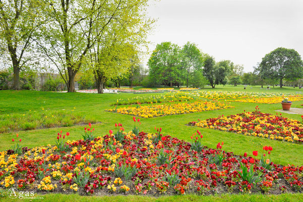 Berlin-Britz - Tulipan im Britzer Garten (4)