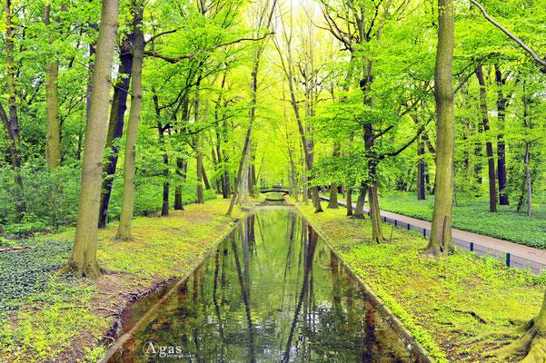 Berlin-Friedrichsfelde - Im Tierpark Friedrichsfelde