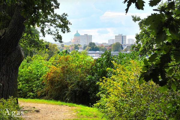 Potsdam - Park Babelsberg - Blick über die Humboldtbrücke zum Potsdamer Zentrum