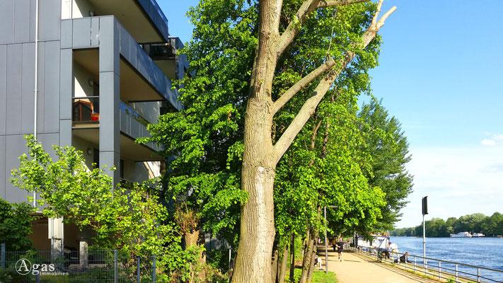 Berlin-Stralau Makler - Neubauprojekt an der Spree (13)