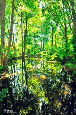 Berlin-Tiergarten - Parkidylle