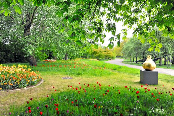 Berlin-Britz - Tulipan im Britzer Garten (3)