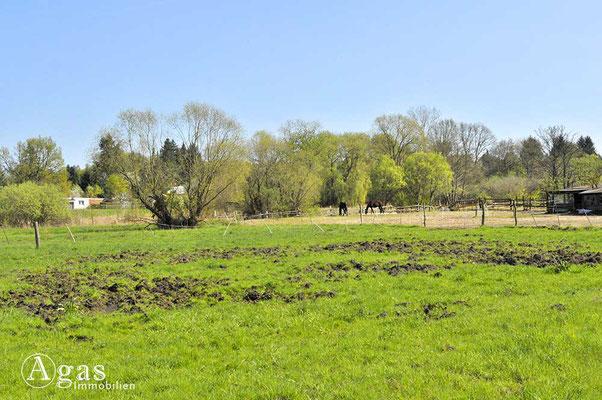 Schildow - Pferdezucht auf den Niedermoorwiesen am Tegeler Fließ