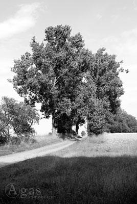Blumberg - Feldweg nach Krummensee