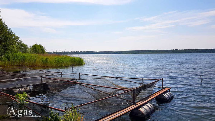 Am Pätzer See - Blick auf den See