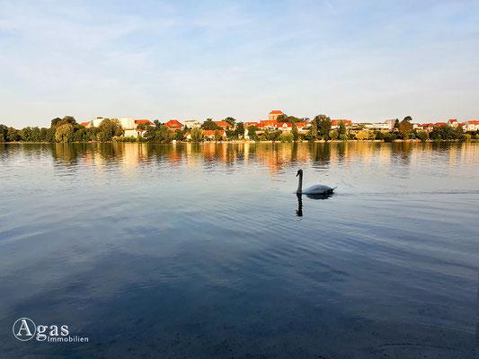 Immobilienmakler Strausberg - Blick über den Straussee zur Stadt