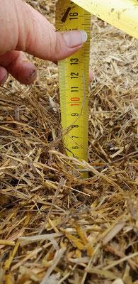 Die Mulchschichten waren 7-10cm tief.