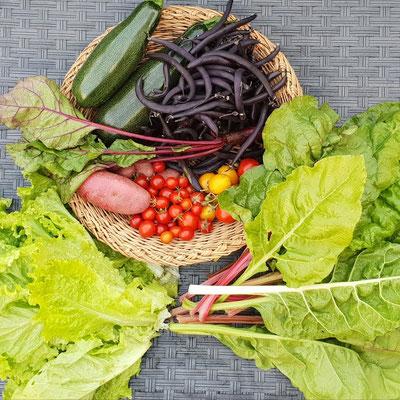 Am 6. September eine erste vielfältige Ertne!